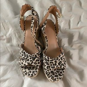 Cheetah pumps